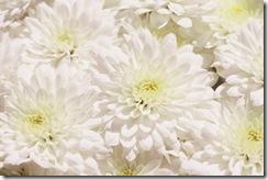 mum-garden-white-marilyn1