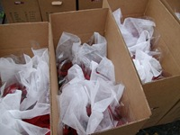 packing-poinsettias-319