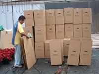 packing-poinsettias-334